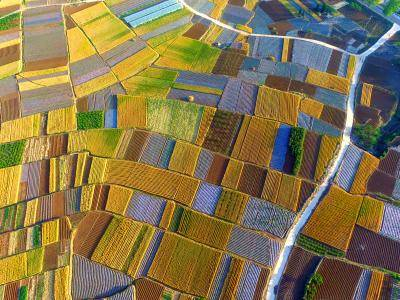 Aerial view of a wheat field on 24 May 2019 in Linyi, Shandong Province of China. Photo: Getty Images.